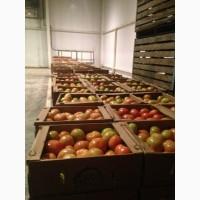 Продам свежие томаты