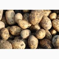Семена картофеля Элита и РС2