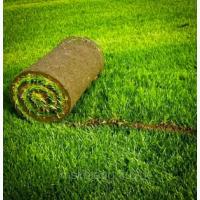 Продаём рулонные газоны