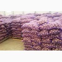 Картофель доставка на Уссурийск, Хабаровск