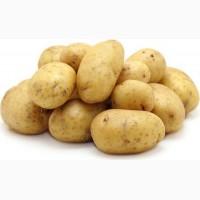 Картофель оптом. Сорта Скарб, Бриз, Манисей
