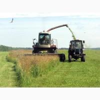Сенаж, силос кукурузный, сено, солома, зерно фуражное, ячмень, пшеница, кукуруза, овес