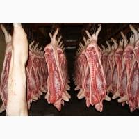 Свинина в полутушах охлажденная оптом со склада в Москве