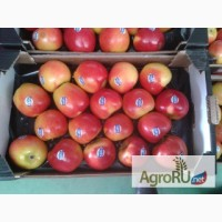 Продаем яблоки из Испании