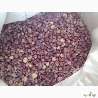 Продам семена чеснока воздушка (бульбочка)