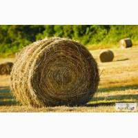 Продаю сено в рулонах