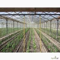 Продаётся хозяйство: тепличный комплекс по выращиванию рассады и овощей