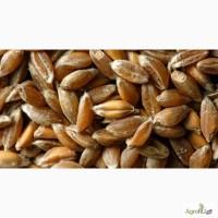 Кормовое зерно с доставкой по области: овес, ячмень