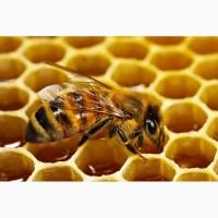 Продам пчелопакеты карпатских пчел (от 2500 р)