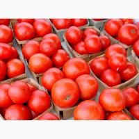 Продам помидор Розовый гигант в любой город страны