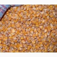 Кормовое зерно с доставкой в Новгородскую область: ячмень, пшеница, овес, кукуруза, шрот