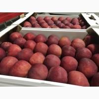 Яблоки оптом от фермерского объединения Белоруссии