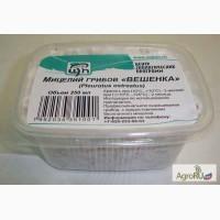 Мицелий грибов в пластиковом контейнере