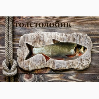Живая рыба Толстолобик для пруда