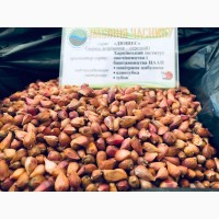 Продам семена чеснока и посадочный материал