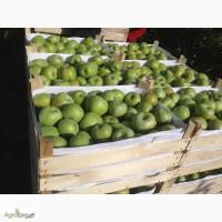 Предлагаем приобрести оптом яблоки сорта Семеренко с доставкой по России