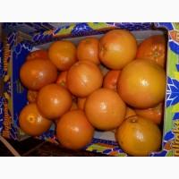 Грейпфрут оптом по доступным ценам от производителя