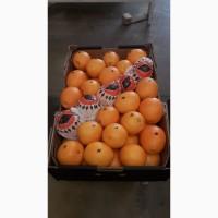 Апельсины, сорт Навель, Марокко