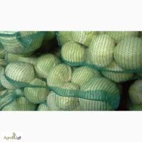 Продаем капусту белокочанную оптом