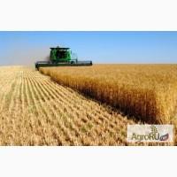 Кукуруза и другие кормовые доставка по области
