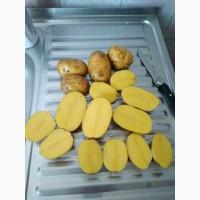 Картофель оптом 5+ сорт Гала (чистая)
