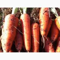 Семена моркови Абако
