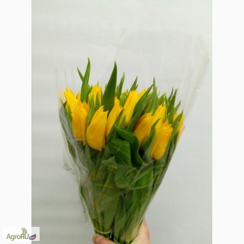 интернет купить голандский тюльпан в москве делать ритуал