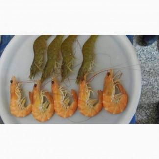 Креветки из Ирана