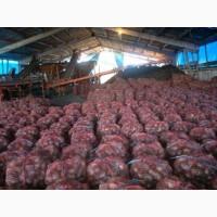 Картофель с доставкой в тюменскую область