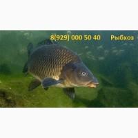 Рыбхоз Корочанский продаст живую рыбу