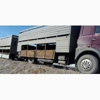 Скотовозы перевозка скота Тюмень