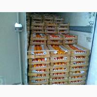 Готова к реализации оптом хурма Шоколадная по цене от производителя