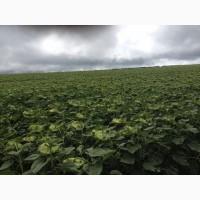 Предприятие сельхозназначения 5000 Га