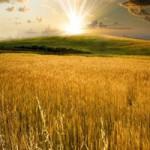 Продаем пшеницу 4 класса. гост