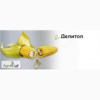 Семена кукурузы Делитоп ФАО210