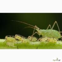 Биоинсектициды на основе бактерий