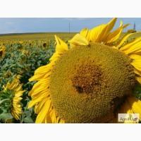 Гербициды по зерновым культурам