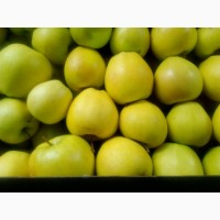 Яблоки из Беларуси оптом от производителя