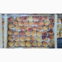 Реализуем продажу оптом Лысого персика нектарина Октябрьского