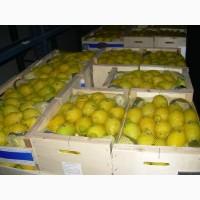 Лимоны оптом недорого. Доставка без границ