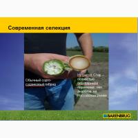 Кормовые травы «Barenbrug»