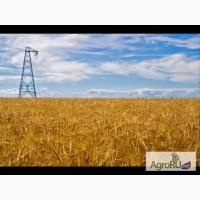 Фуражная пшеница 20 тонн доставка гост
