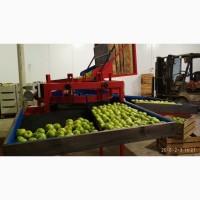 SORTER Линия / машина для калибровки и сортировки яблок и других фруктов и овощей