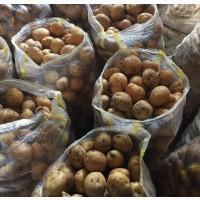 Продаем картофель с Ирана