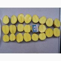 Картофель семенной Гала 1-ая реподукция
