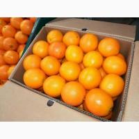 Апельсины Валенсия прямые поставки Египет Orange Valencia
