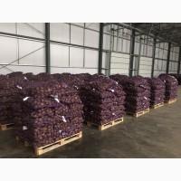 Картофель оптом продовольственный от производителя