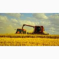 Резерв зерна из РФ урожай 2018
