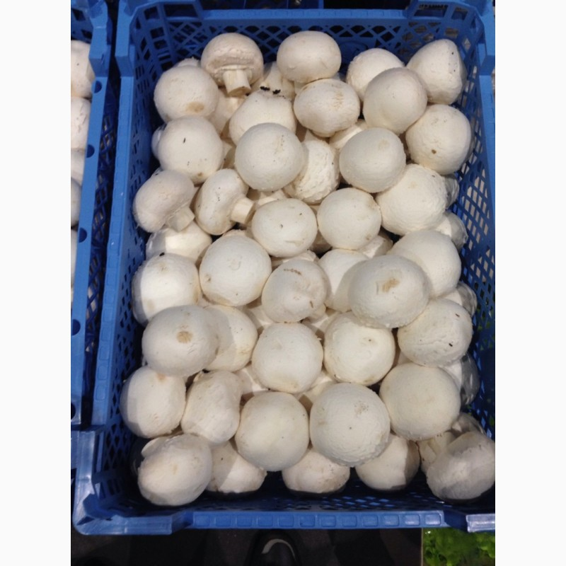 москва грибы шампиньоны