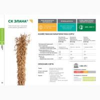 Семена сои: сорт ЭЛАНА селекции Компании Соевый комплекс